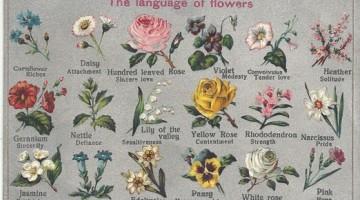 weddingflowersymbolism